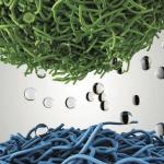Organic Neuromorphic Devices
